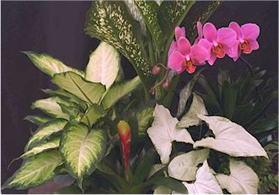 This page has info on anything&everything about House Plants!